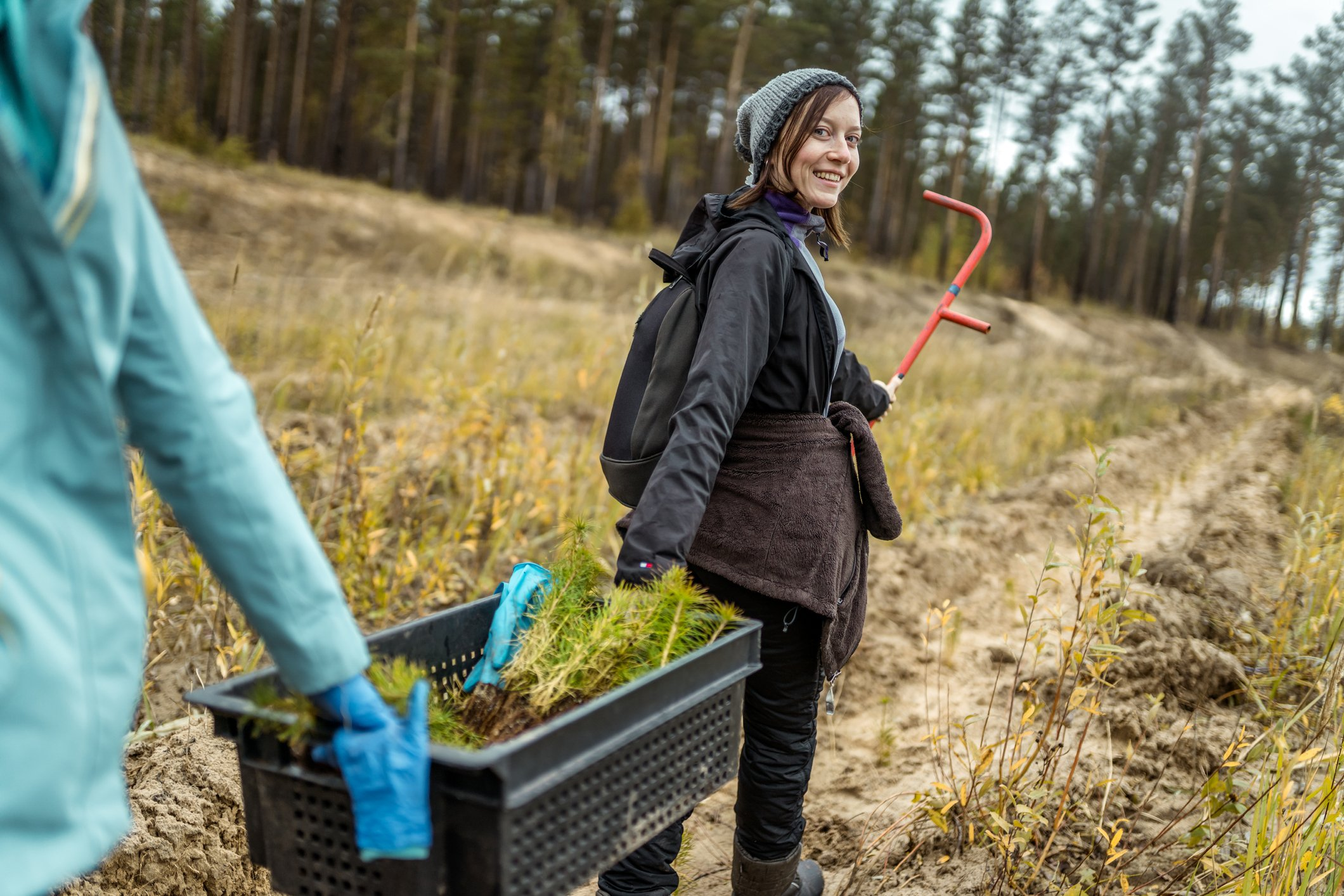Turn Your Forest Land into a Certified Tree Farm