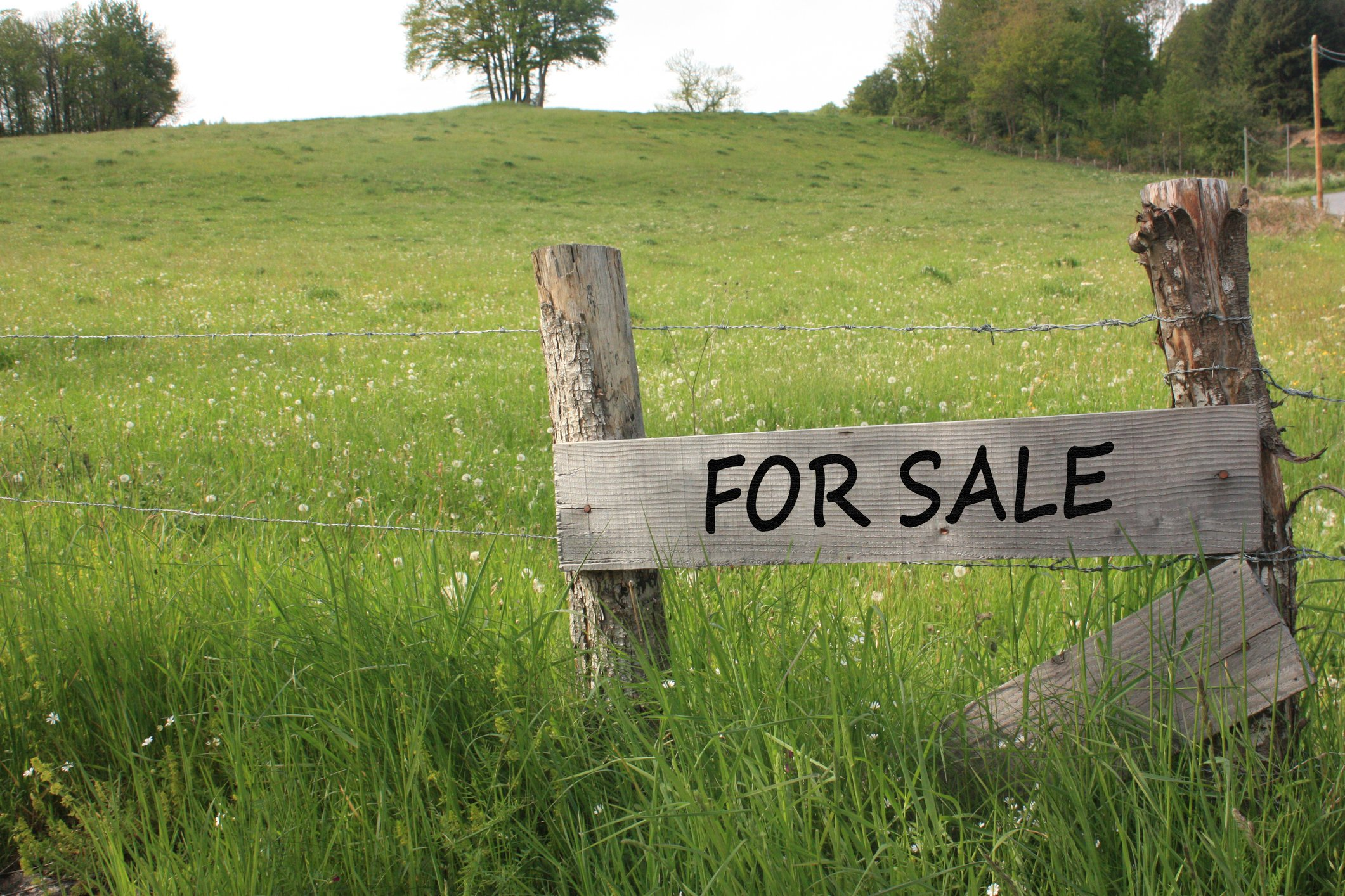 12 Things To Look For In A Homesteading Property