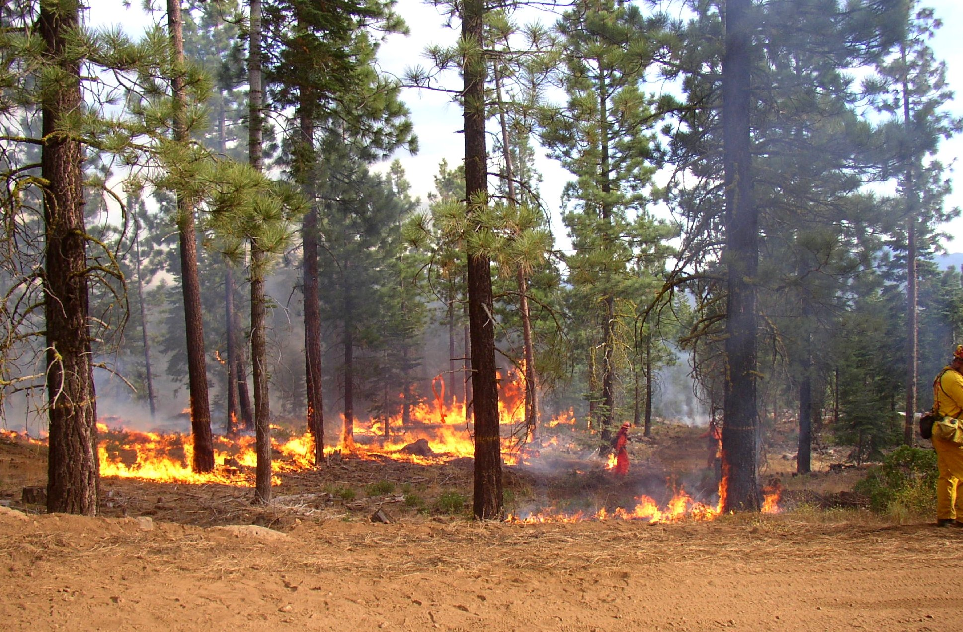 The Benefits of Prescribed Burns for Private Forested Land