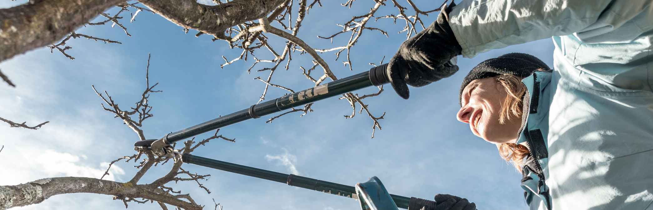 How to Prune Trees, Bushes and Vines
