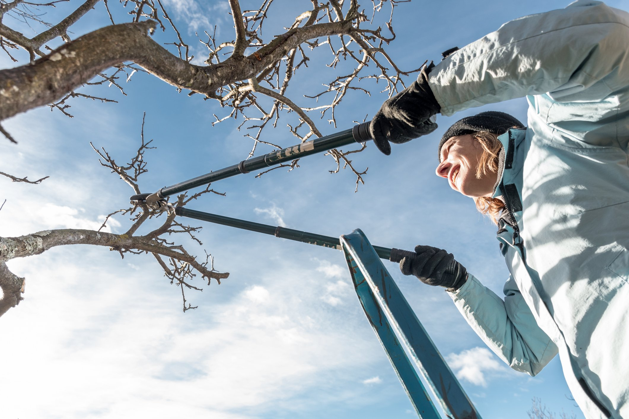Everything you need to know about tree, bush and vine pruning