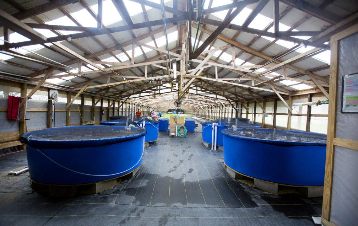 Traders Hill Farms leads the way in aquaponics