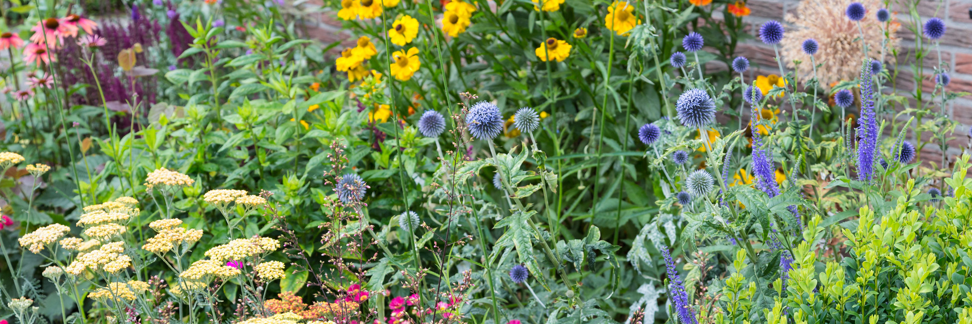 How to Transition Your Garden to Perennials