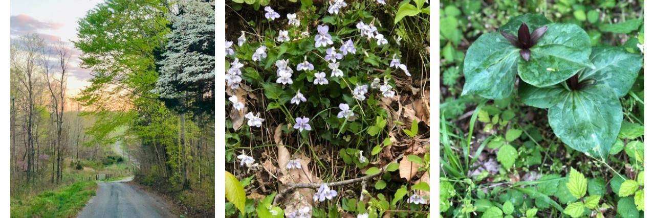 Celebrate the Wildflowers of Appalachia