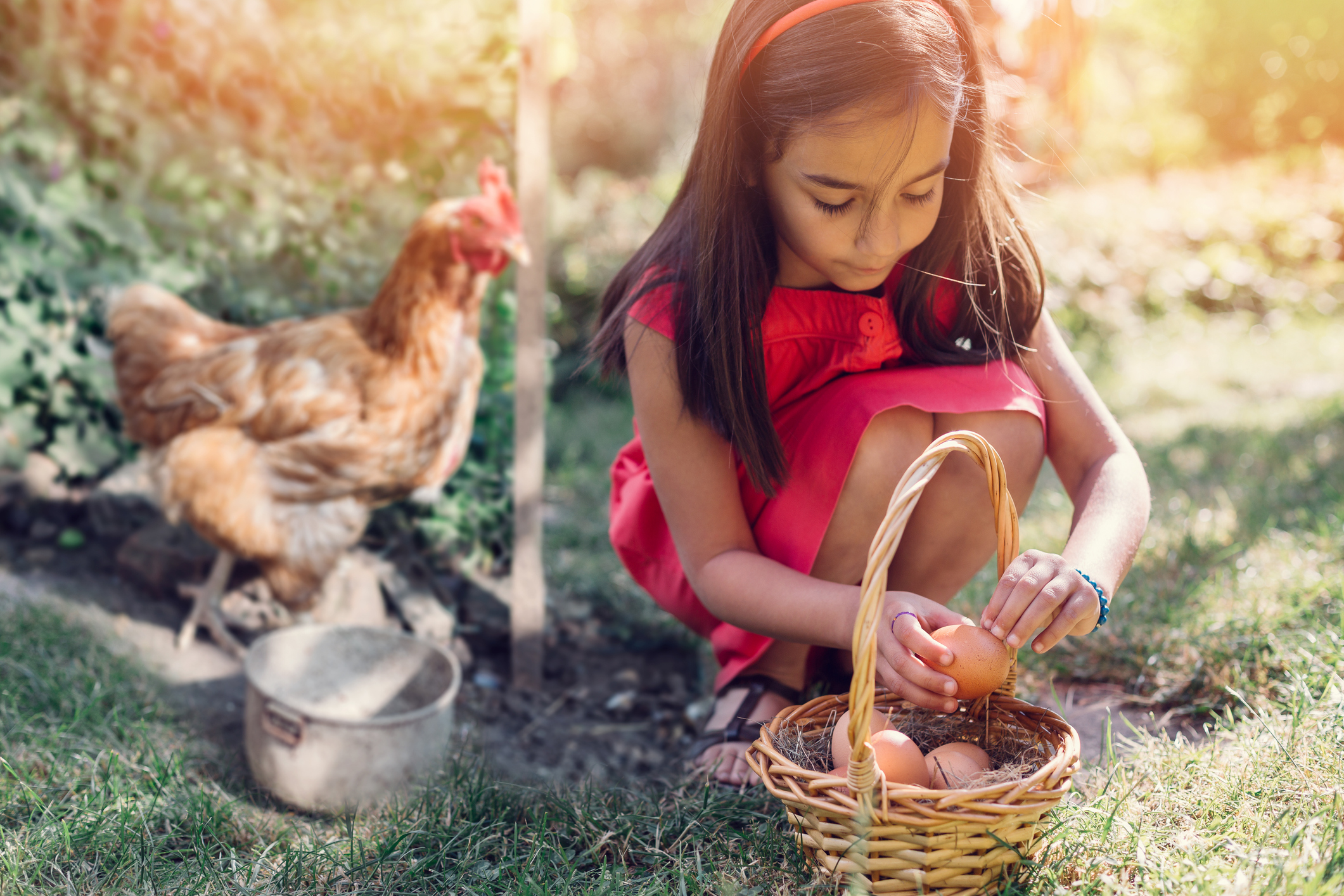 How Keeping farm animals keeps you happier and healthier